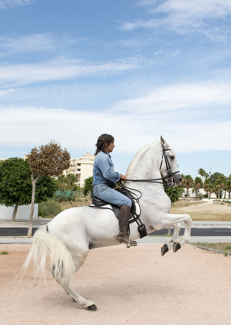 Traffic Proof Andalusian