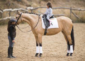 Andalusian Pura Raza Española PRE horses for sale