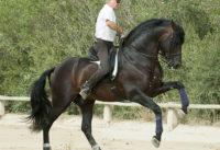 horses spain