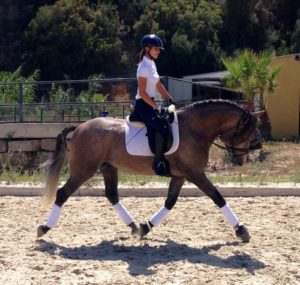 Ulano a young PRE Stallion and good mover