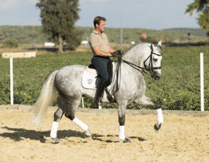 Lario PRE with Great prospect for fei dressage