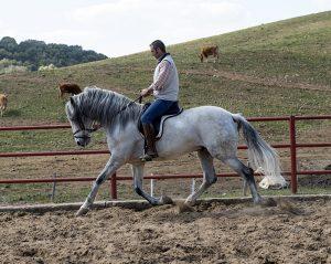 Forward Beautiful P.R.E Stallion