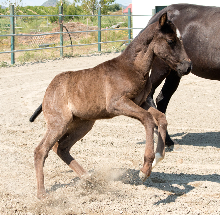 Different lines of breeding have an impact on character, movement and conformation