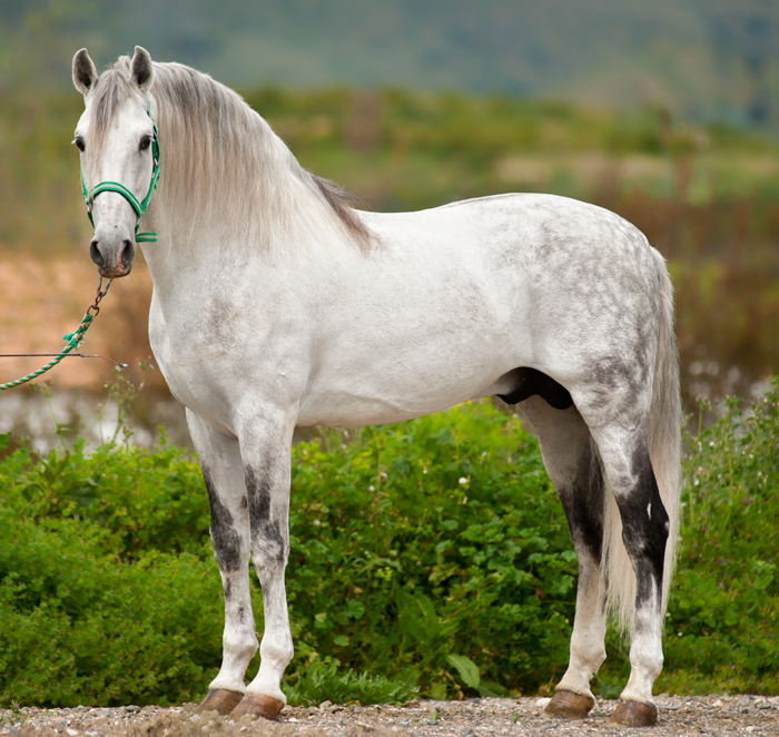 The conformation tells a story about the functionality of the horse...