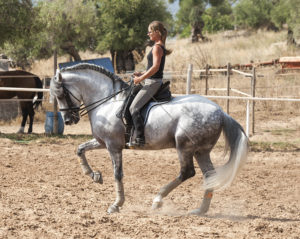 Compare Andalusian and Warmblood