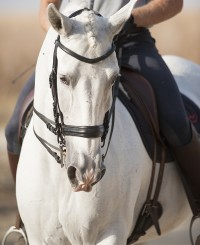 World Class FEI Intermediaire I mare