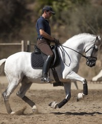 Young riders andalusian horse for sale