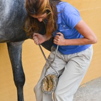 Checking hoof