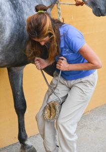 Checking hoof