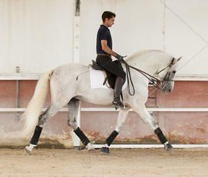 Alta Escuela Dream Horse