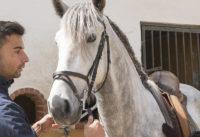 Sensitive but lovely grey stallion
