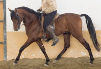 Functional and interesting prospect for dressage