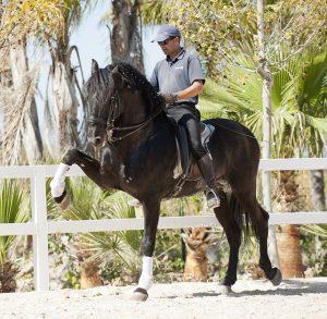 Buying a Spanish horse