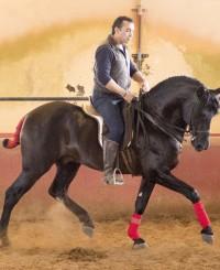 Jet Black Baroque PRE Stallion
