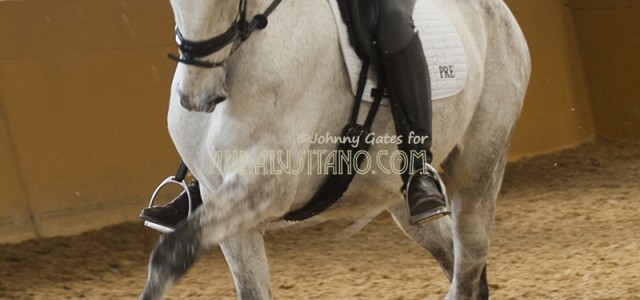 horsesapril3012-copy