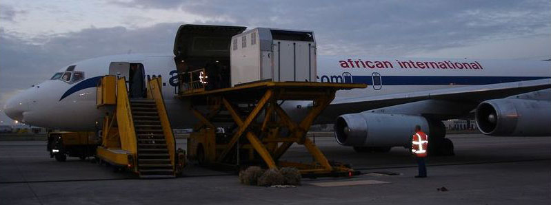 Air transport of horses