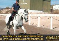 Schoolmaster Archives - Horses for sale