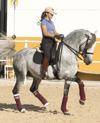 Schoolmaster Hispano Arab