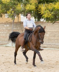 Pura Raza Española Stallion For Dressage