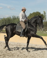Black Stallion with Potential!