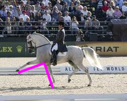 Warmblood and andalusian
