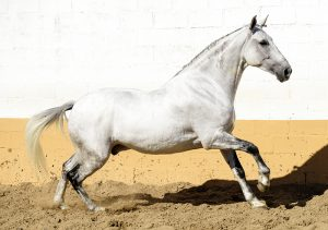 Functional Andalusian