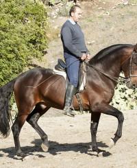 Nice friendly stallion