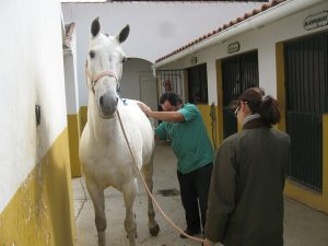 Horse being vetted