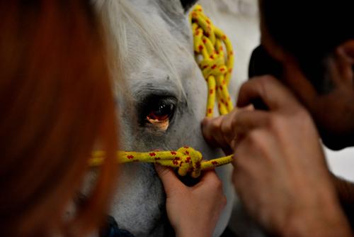 Examining an eye